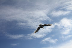 Seagull. S flying away from dock Stock Photo