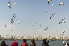 Seagull. seagulls flying in the back of the ships at sea. Seagull. seagulls flying in the back of the ships at sea stock photo