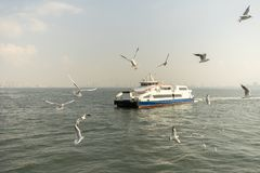 Seagull. seagulls flying in the back of the ships at sea. Seagull. seagulls flying in the back of the ships at sea royalty free stock photo