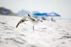 Seagull on the seashore. Seagull enjoing holidays on the seashore Royalty Free Stock Image