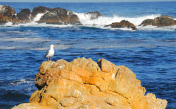 Seagull at Seashore Stock Photo