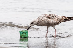 Seagull on the seashore Royalty Free Stock Photos