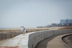 Seagull by the Seaside Stock Photography