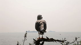 seagull seatting na gałąź zbiory