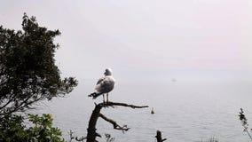 seagull seatting na gałąź zbiory wideo
