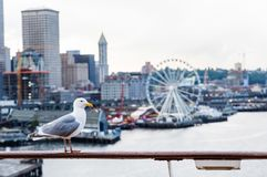 Seagull and Seattle Ferris Wheel Stock Photos