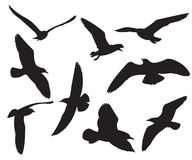 Seagull Set Silhouettes Royalty Free Stock Photography