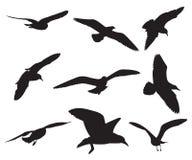 Seagull Set Silhouettes Stock Image