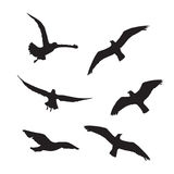 Seagull Set Silhouettes on the white background Royalty Free Stock Photography