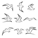 Seagull set. Vector. Illustration seagull vector illustration
