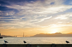 Seagull Setting Off from the  Railing on San-Fransisco Pier Duri Royalty Free Stock Photos