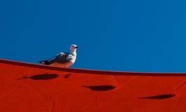 Seagull Shadows Stock Photos