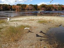 Seagull shadows Stock Image