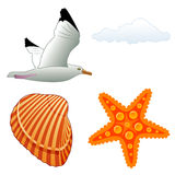 Seagull and shell Stock Photo
