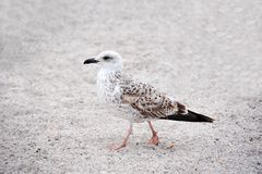Seagull on shore Stock Photo