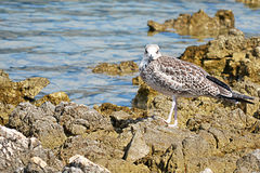 Seagull on the shore stock photo