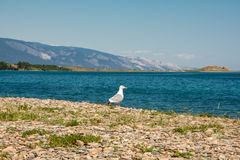 Seagull on the shore Stock Image