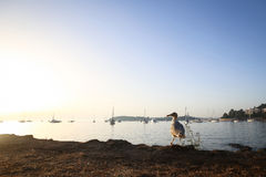 Seagull on shore at sunset Royalty Free Stock Photos
