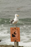 Seagull on Sign. Seagull sitting on a sign at the beach Royalty Free Stock Photo