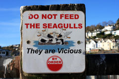 Seagull Sign Stock Photos