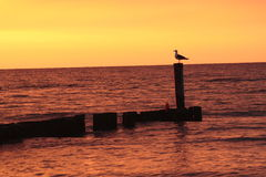 Seagull silhouette. Seagull perched at an ocean jetty Royalty Free Stock Photo