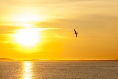 Seagull silhouette above the sea at colorful sunset. Idea of harmony and tranquility stock photo