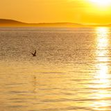 Seagull silhouette above the sea at colorful sunset. Idea of harmony and tranquility stock image