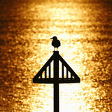Seagull silhouette against golden sunset royalty free stock images