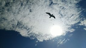 Seagull silhouette. Seagull against a white cloud with blue sky & sun stock photo