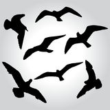 Seagull silhouette Royalty Free Stock Photos