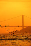 Seagull Silhouette With Bosphorus Bridge. Background Royalty Free Stock Image