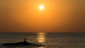 A seagull silhouette on the cliffs coming out of the water, at the sunrise in the Mediterranean Sea, with orange colors. This photo was taken at the shore of the royalty free stock photos