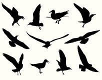 Seagull silhouette collection Royalty Free Stock Photos