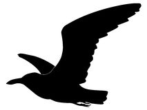 Seagull. Silhouette of seagull in the flight Royalty Free Stock Photos