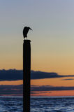 Seagull silhouette resting on a post at sunset Stock Photo