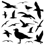 Seagull silhouette set  on white background vector Stock Image
