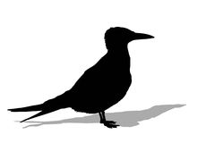 Seagull silhouette with shadow Stock Photo