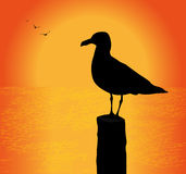 Seagull silhouette at sunset Royalty Free Stock Photography