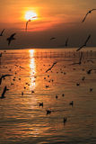 Sunset with Seagull Silhouetted  Stock Photography