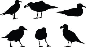 Seagull Silhouettes Stock Photography