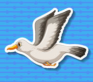Seagull. Single seagull flying alone with blue background Royalty Free Stock Photos