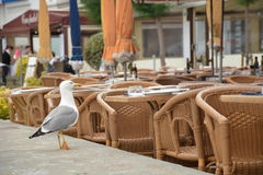 Seagull. A single seagull ist observing people which are passing a restaurantat  at Costa Brava Royalty Free Stock Photo