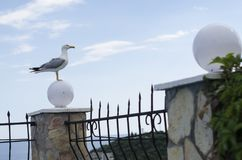 A seagull is siting on a fance Royalty Free Stock Photography