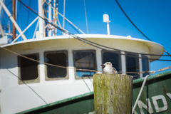 Seagull sits on a post with a boat in background. Seagull rests on a wooden post with a fishing boat in background Royalty Free Stock Photos