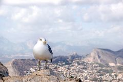 A seagull sits on a rock on top of a mountain, a landscape in the background with mountains and clouds. A seagull sits on a rock on top of a mountain, a stock photos