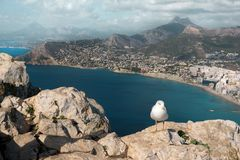 The seagull sits on top of a mountain overlooking the sea and the city.  royalty free stock photos
