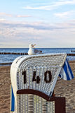 Seagull sitting on beach chair at the baltic sea Stock Photo