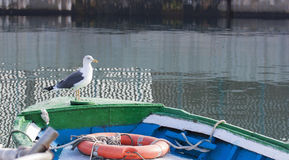 Seagull sitting on a boat in the harbor.spain. Seagull sitting on a boat in the harbor Royalty Free Stock Photos