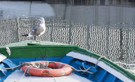 Seagull sitting on a boat in the harbor. Spain Stock Photos