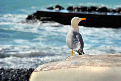 Seagull sitting on a boat on the sea promenade Stock Photography